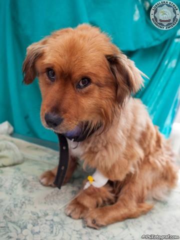 zbiórka publiczna-pies Larry-Lubelska Straż Ochrony Zwierząt-Fundacja KReAduakcja-2015